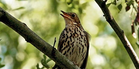 POSTPONED UNTIL FURTHER NOTICE Birdsong & Bird recognition with Lucy Delve in Sydney Gardens, Bath on April 6th tickets