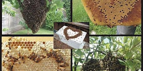 In-class beekeeping workshop tickets