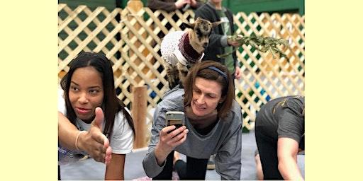 Indoor Goat Yoga by Shenanigoats - Nashville, Thu 6:30pl