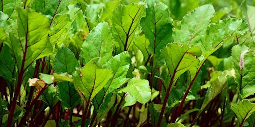 Start Your Summer Veggies