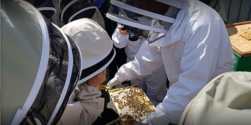 Rooftop Beekeeping Experience at the East London Mosque