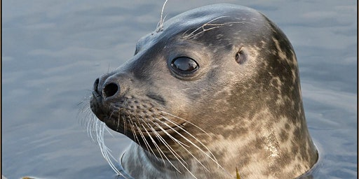 Flourishing Oceans - Marine Mammal Rescue's Work to Protect Marine Life