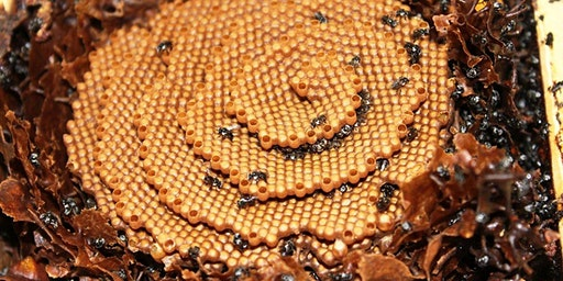 NBB monthly meeting - Native Stingless Bees