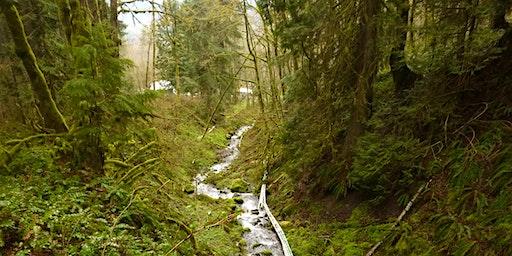 Mount Rainier Gateway Planting - 2/26