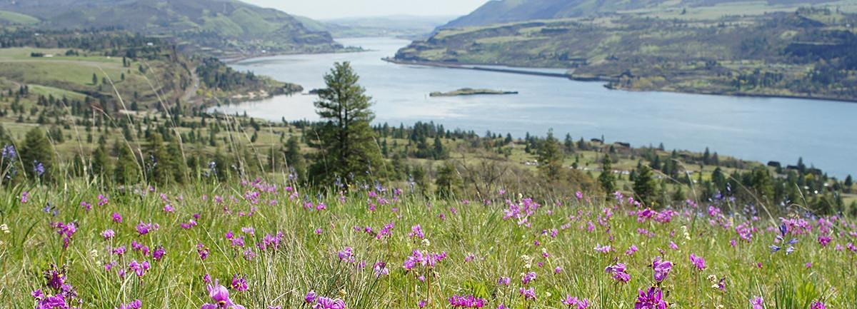 Wildflowers at Catherine Creek & Klickitat Trail, WA