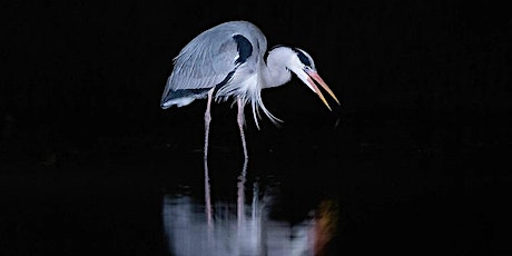 Wildlife Photography - Workshop One and Two tickets