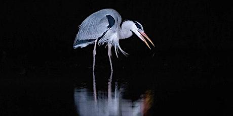 Wildlife Photography - Workshop One tickets
