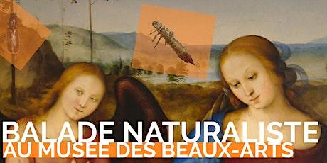 Balade naturaliste au Musée des Beaux-Arts billets