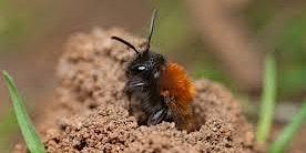 Spring Bee I.D. Walk
