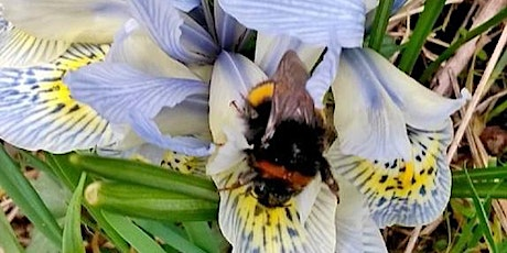 Early Summer Bee ID Walk  tickets