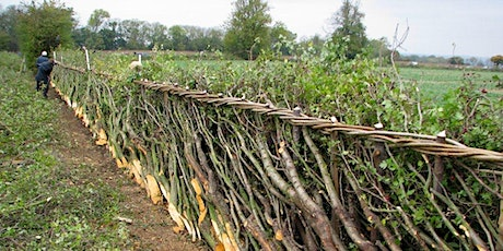 Introduction to Hedgelaying tickets