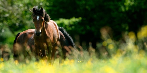 Monthly Shamanic Journeying Circle with Horses in The New Forest