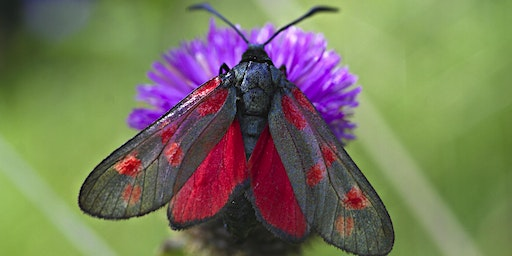 Marvellous Moths ***Members' only***