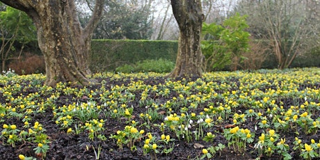 Rose Pruning Masterclass Tues 25 Feb tickets