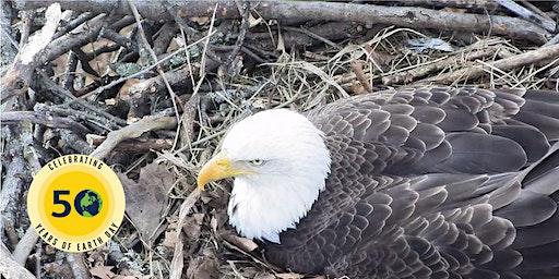 Bald Eagle Ecology for Educators