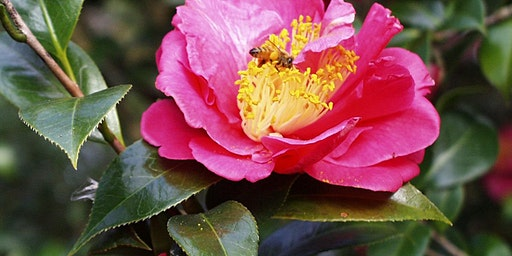 Gardening for Native Pollinators