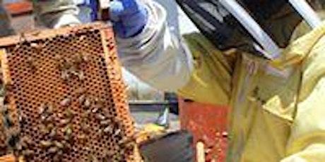 Rooftop Beekeeping Course - Intensive  2 day weekend in London - 13-14 June tickets