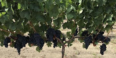 Texas Prospective Grape Grower Workshop LIVE WEBINAR tickets