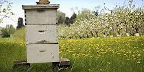 Beekeeping seminar tickets