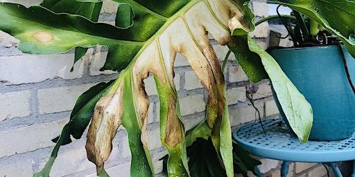 Plant Rehab