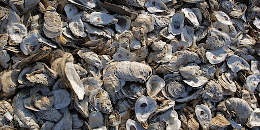 Sci-Cafe: Oysters in our Bay