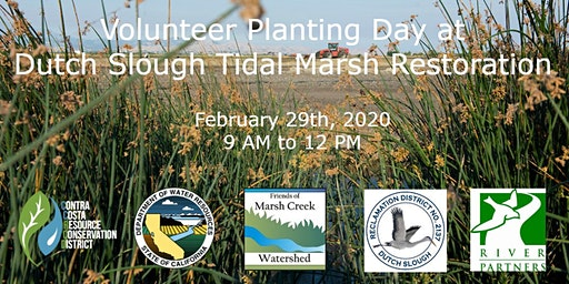 Volunteer Planting at Dutch Slough Tidal Marsh Restoration