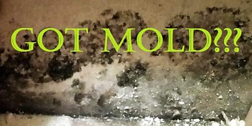 What Realty Professionals Should Know About Mold