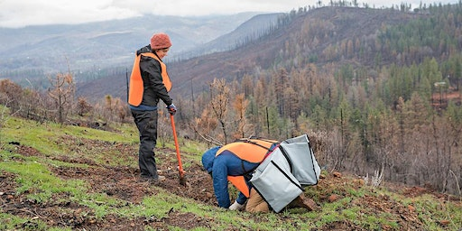 Camp Fire Restoration Planting with the Butte County RCD
