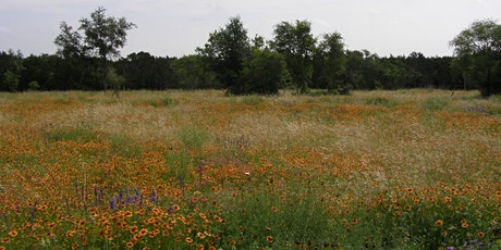 Canceled - Nature Walk: Wildflowers of Hardberger Park tickets