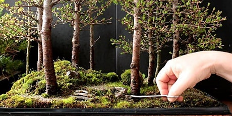 The Art of Bonsai - Beginner Level Hands-On Workshop tickets