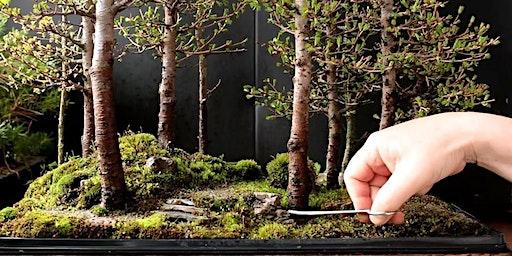 The Art of Bonsai - Beginner Level Hands-On Workshop