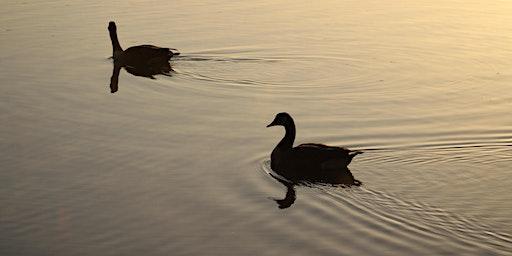 RBMS Field Trip - Breakfast with the birds at Reedy Swamp (near Shepparton)