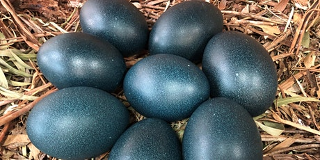 Briars Junior Ranger - Eggstraordinary Eggs! tickets