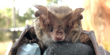 Microbats in the 'Burbs tickets