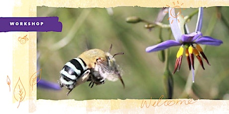 Native bees in your backyard. Presented by the City of Prospect. tickets