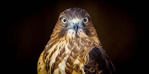 Raptor and Falconry Photography Workshop