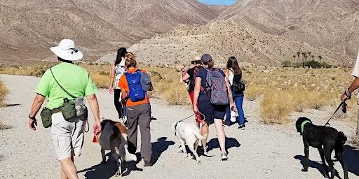 Happy Tails Dog Adventure at the La Quinta Cove