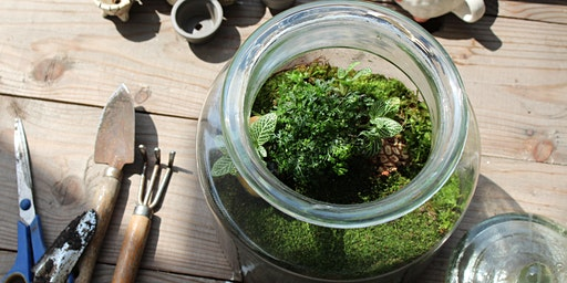 Closed Jar Terrarium Workshop