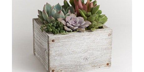 Succulent Garden Mini Woodbox Planter Workshop at Axe & Arrow Brewery tickets