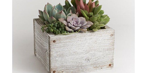 Succulent Garden Mini Woodbox Planter Workshop at Axe & Arrow Brewery