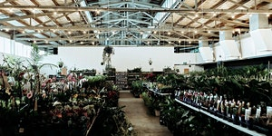 Perth - Huge Indoor Plant Warehouse Sale- Summertime...