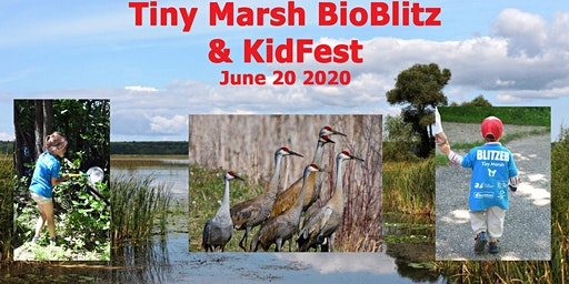 Tiny Marsh BioBlitz  and KidFest