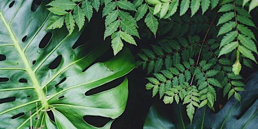 Wild Island Plant Swap