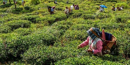 Ep.2   Tè del mondo in miscelazione