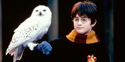 Harry Potter Series: Hedwig Owl Plaster-of-Paris Sculpture: 2-Day Workshop