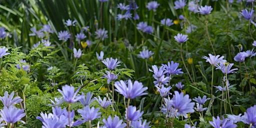 Cwrs: Tymhorau yn yr ardd- Gwanwyn | Course: Seasons in the garden- Spring