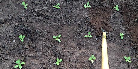 Community Farmer Day - 10 Oct - winter salad planting & squash harvesting tickets