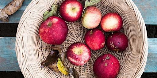 Community Farmer Day - 12 Sept - harvesting the apples
