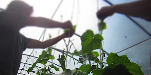 Community Farmer Day - 23 May - stringing in the tunnels