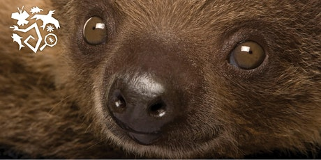 Sloth Show with Wildlife Discovery Center tickets